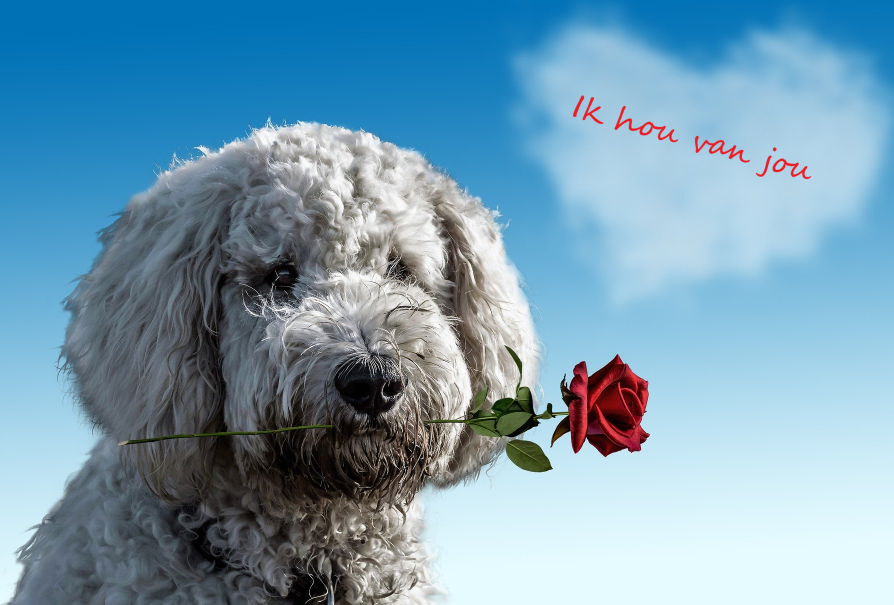 Balloon Styling cadeau-in-een-ballon-geld in een ballon -niet vergeten ballonnen Tilburg zomaar ik denk aan je hond met roos I love you